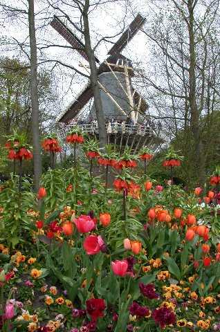 Flowers and WindmillFlowers, Keukenhof