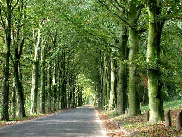 Beautiful lane with trees